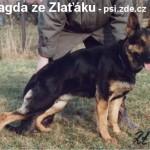 Magda ze Zlaťáku